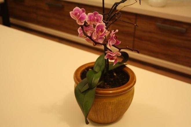 floarea mea
